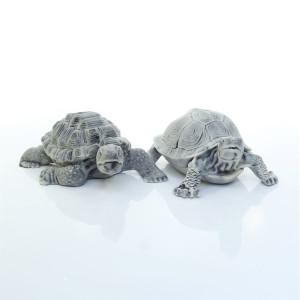 Черепаха средняя (2 вида)